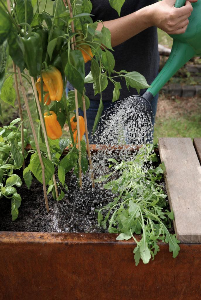 Bewässerung im hochbeet