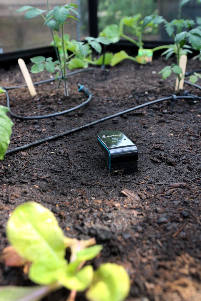 Bodenfeuchtigkeit messen für effiziente Bewässerung mit smart Sensor GARDENA
