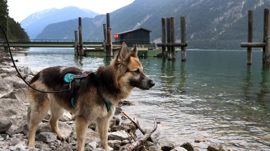 Achensee mit Hund