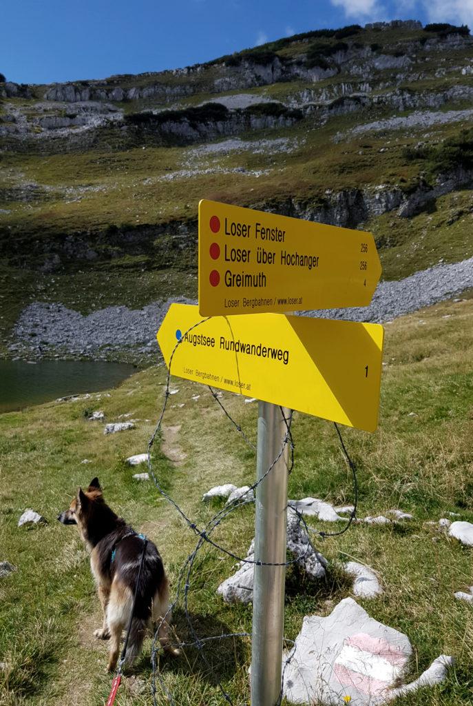Loser Wanderung mit Hund Österreich